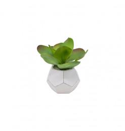 Succulente lotus...