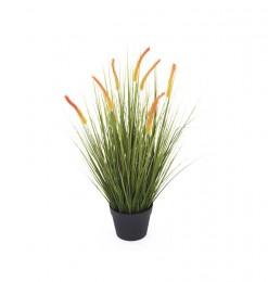Plante bristle grass