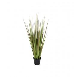 Arbre lemongrass