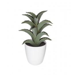Succulent + cactus