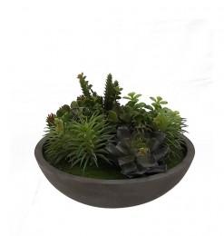Composition de plante grasse
