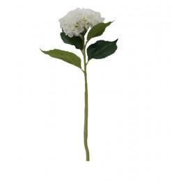 Tige hortensia blanche